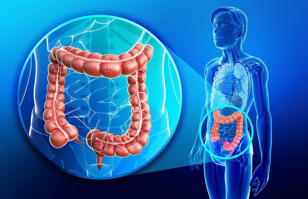 onderzoek van de dikke darm